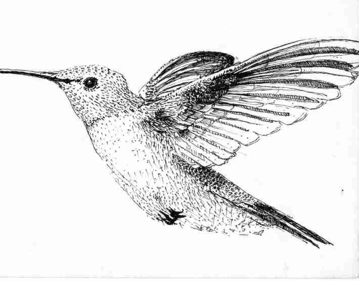 mod colibri
