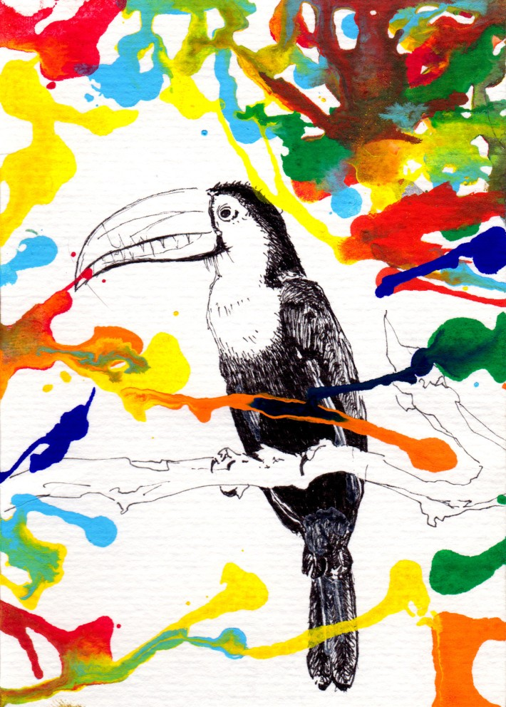 toucan kevin rouxel