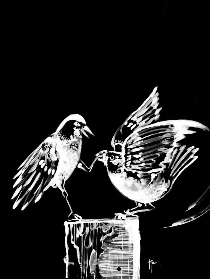 Querelle d'oiseaux - kevin rouxel jpg