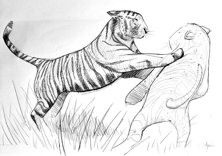 tigres-croquis-kevin-rouxel